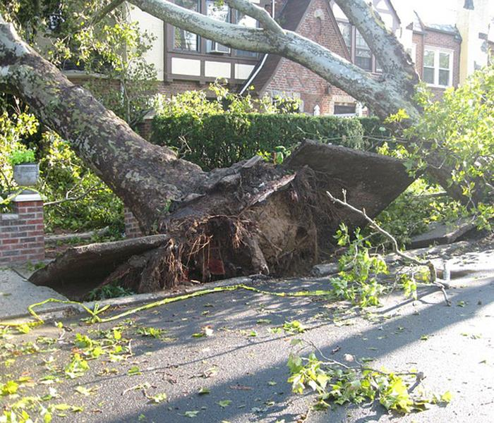 Storm Damage Surviving A Natural Disaster